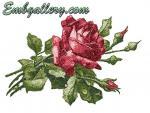 """""""Алая роза"""" (бесплатно)"""